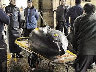 sebuah ikan tuna sirip biru berukuran raksasa terjual s