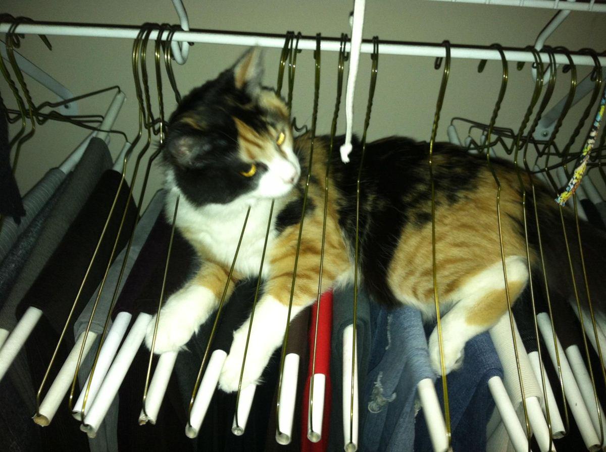 Кот забрался на вешалку в гардеробе - прикольные коты 22-11-12