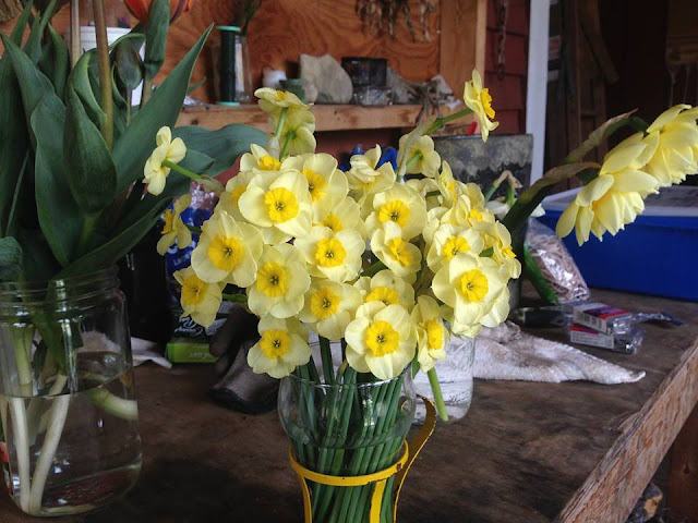 Chickadee Hill Flowers, farmer florist, sustainably grown, organic, Maine, Maine weddings, wedding, artful, wild and rustic, elegant, uncommon, fairytale, unique, gardening, daffodils, miniature daffodills,