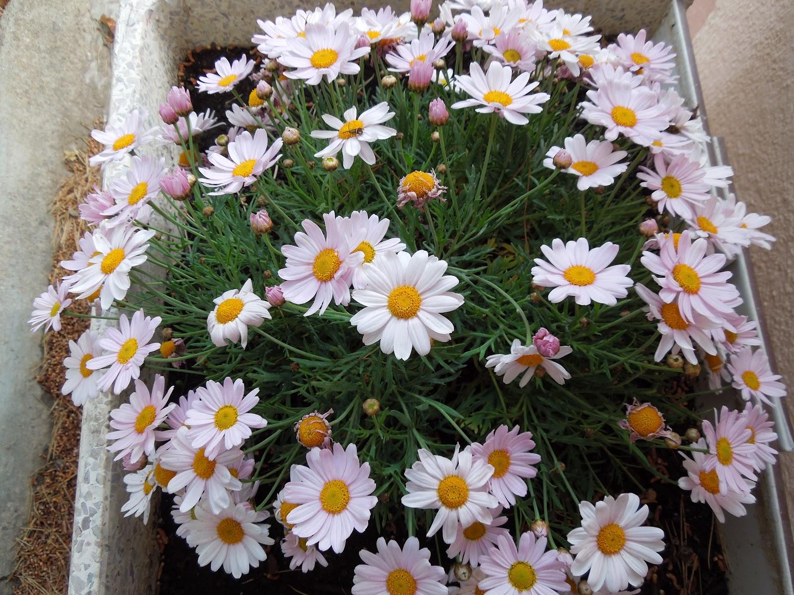 Tipos de flores nombres y fotos - Todo tipo de plantas con sus nombres ...
