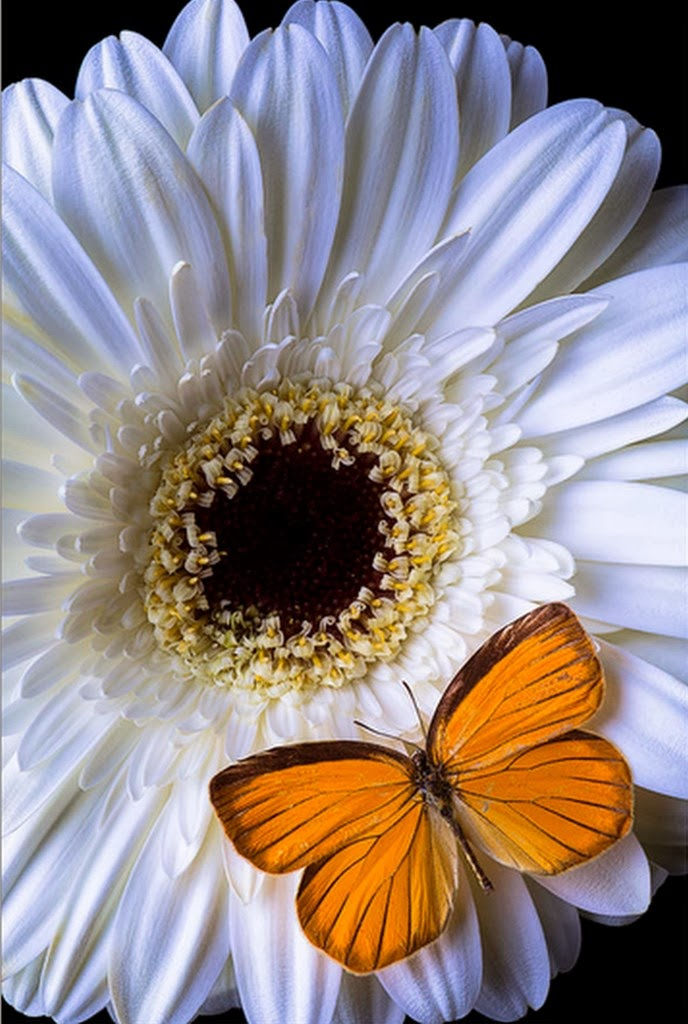 mariposas-y-flores