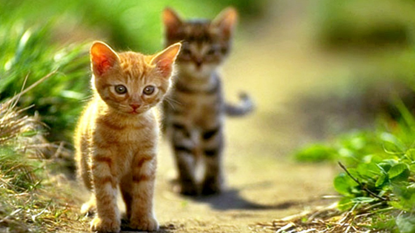 cute cats pictures and wallpapers dat nature