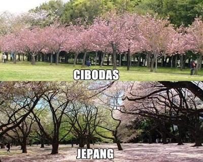 Jepang Vs Cibodas