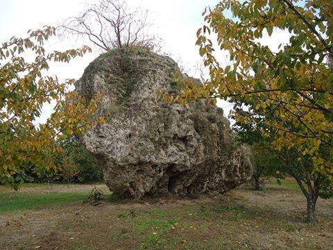 Ο βράχος στον λόγγο