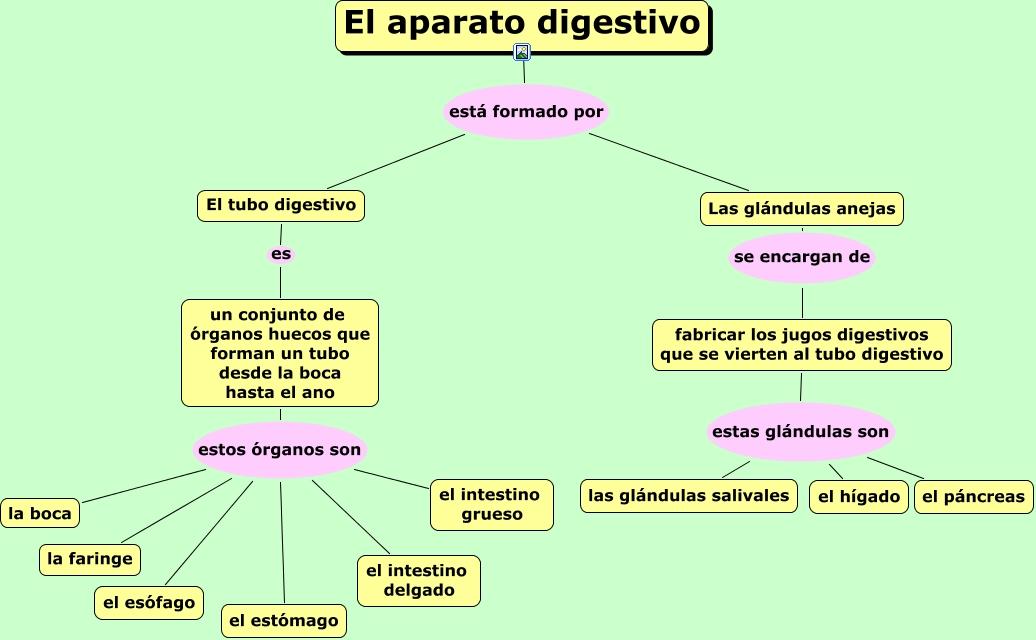Encantador Diagrama De La Anatomía Del Sistema Digestivo Festooning ...