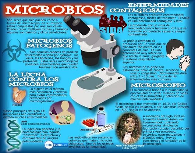 mapa, conceptual, concepto, microbios, germenes, bacterias, hongos, virus, protozoos, enfermedades, microscopio, ciencias, naturaleza