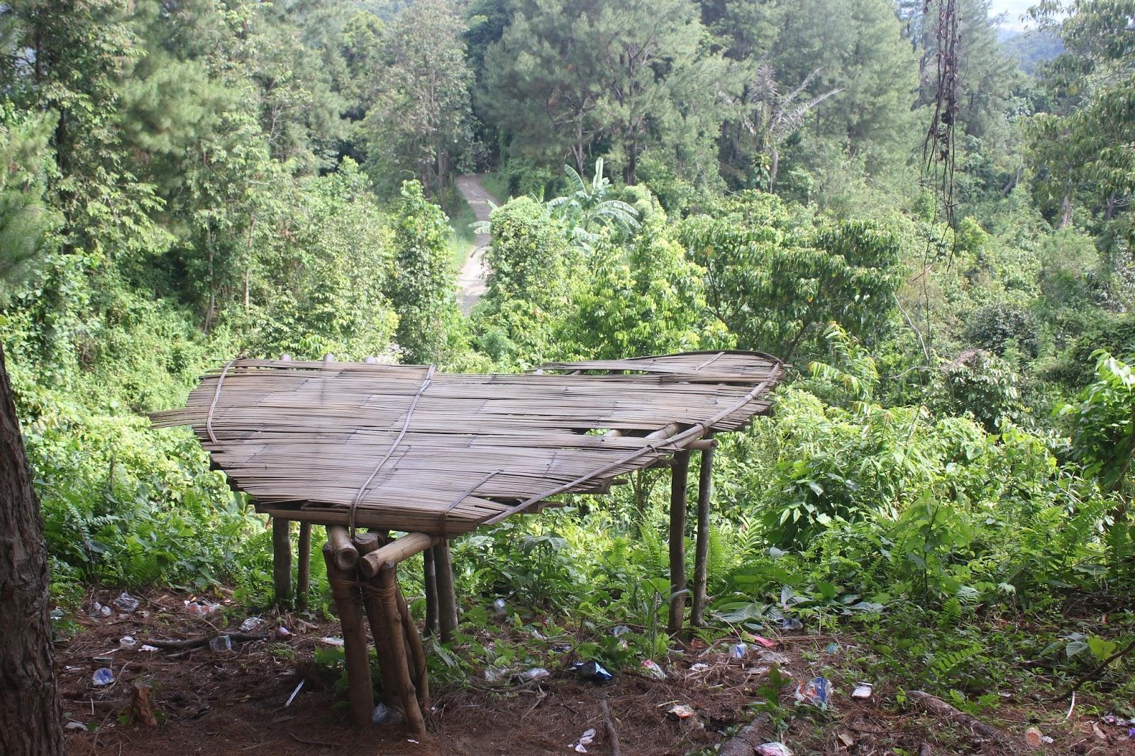 fasilitas hutan pinus  tapango