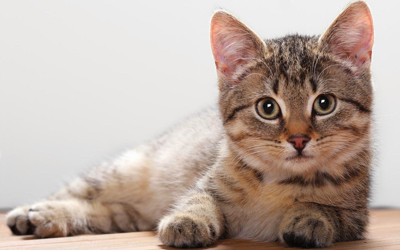 música feita para gatos