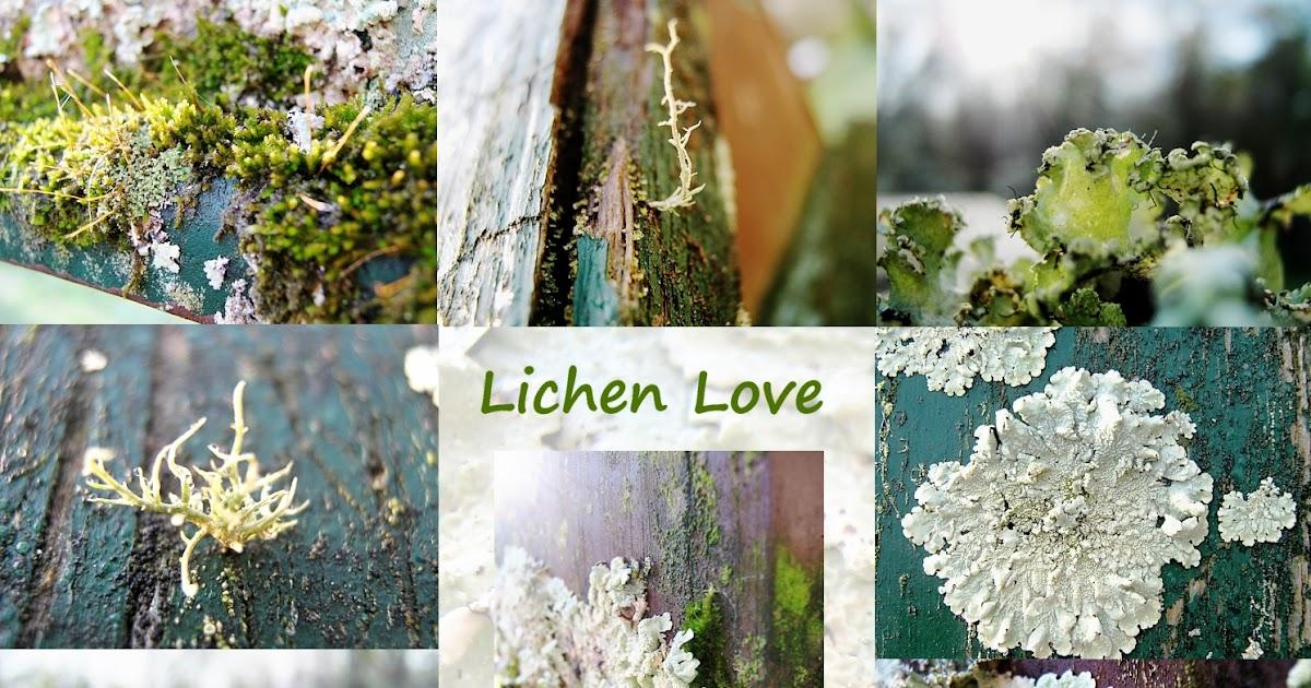 Honeysuckle Lane: Lichen Love