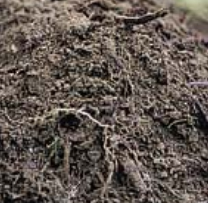 Foundation problem with organic soil for Mineral soil definition