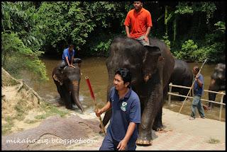 elephants malaysia