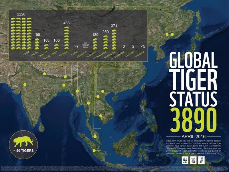 Global Tiger Status