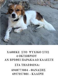 Χάθηκε ο σκυλάκος της φωτογραφίας στο Ψυχικό!