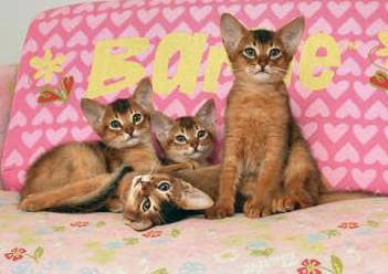 Niia Blog All About Animals Jenis Jenis Kucing
