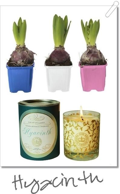 hyacint, juldofter, doftljus, doftljus hyacint