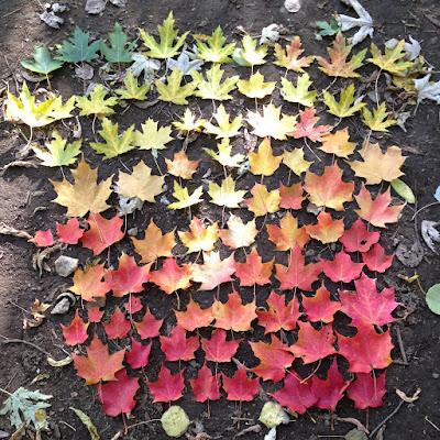 mùa thu ở toronto
