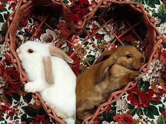 #4 Rabbit Wallpaper