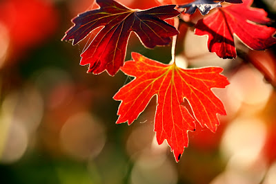 photographing autumn leaves