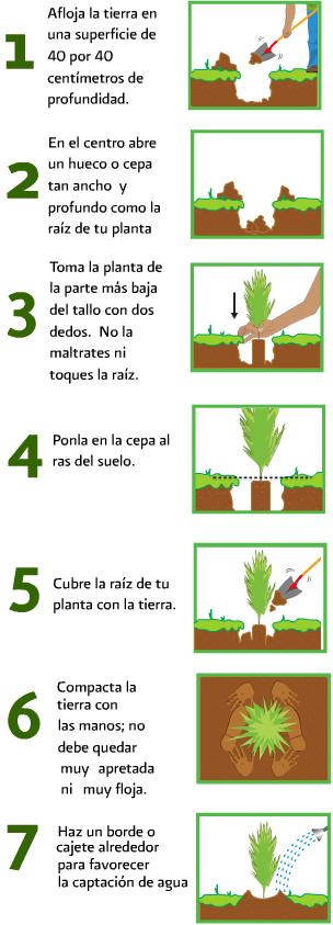 La mam de nicol s plantar un rbol for Pasos para sembrar una planta
