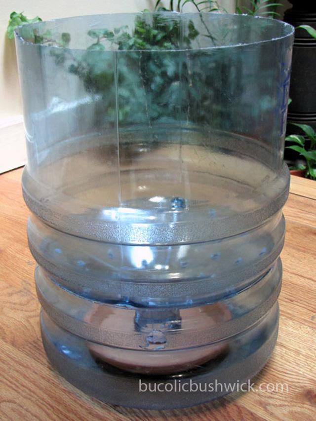 Como plantar tomates num galão de água