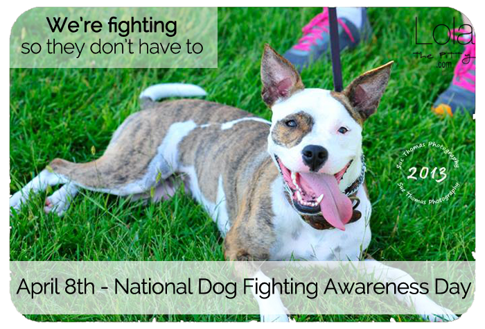 You Can Help End Dog Fighting #NDFAD