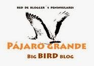 proyecto PÁJARO GRANDE