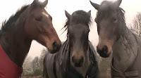 Lo que estos caballos hicieron fue asombroso