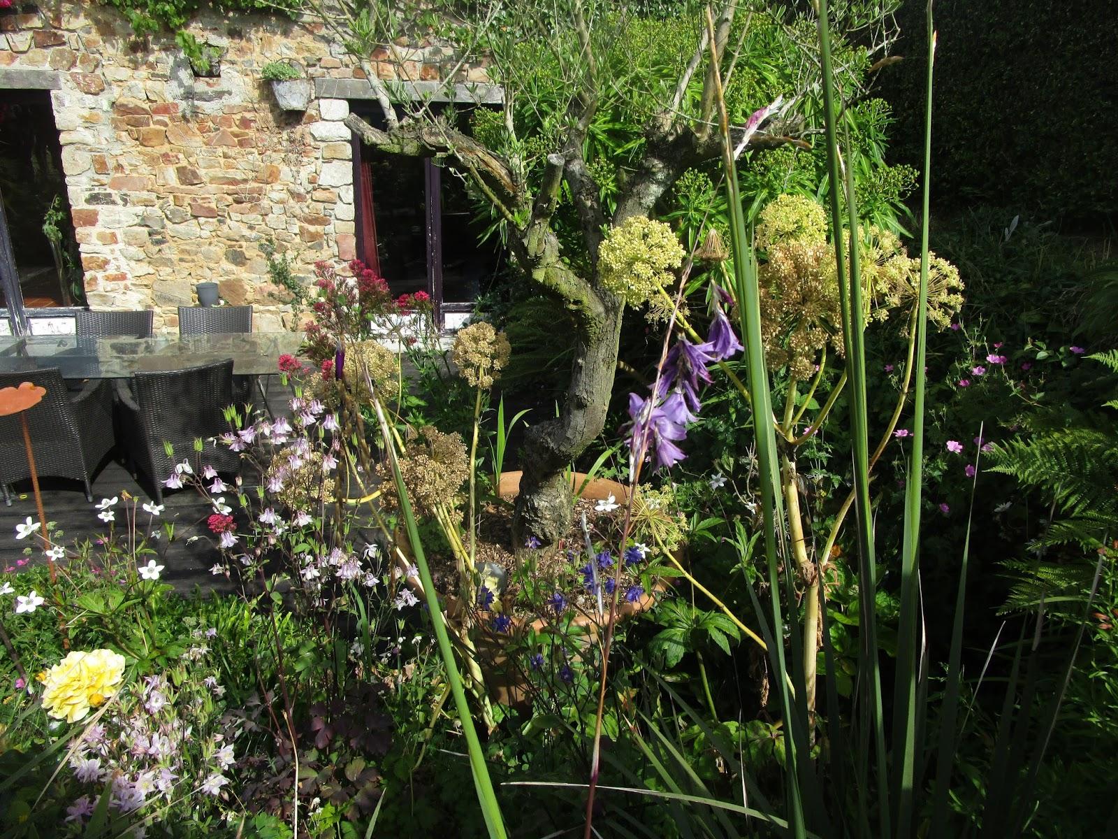 IMG_3537 Meilleur De De Abri De Jardin Bricorama Concept