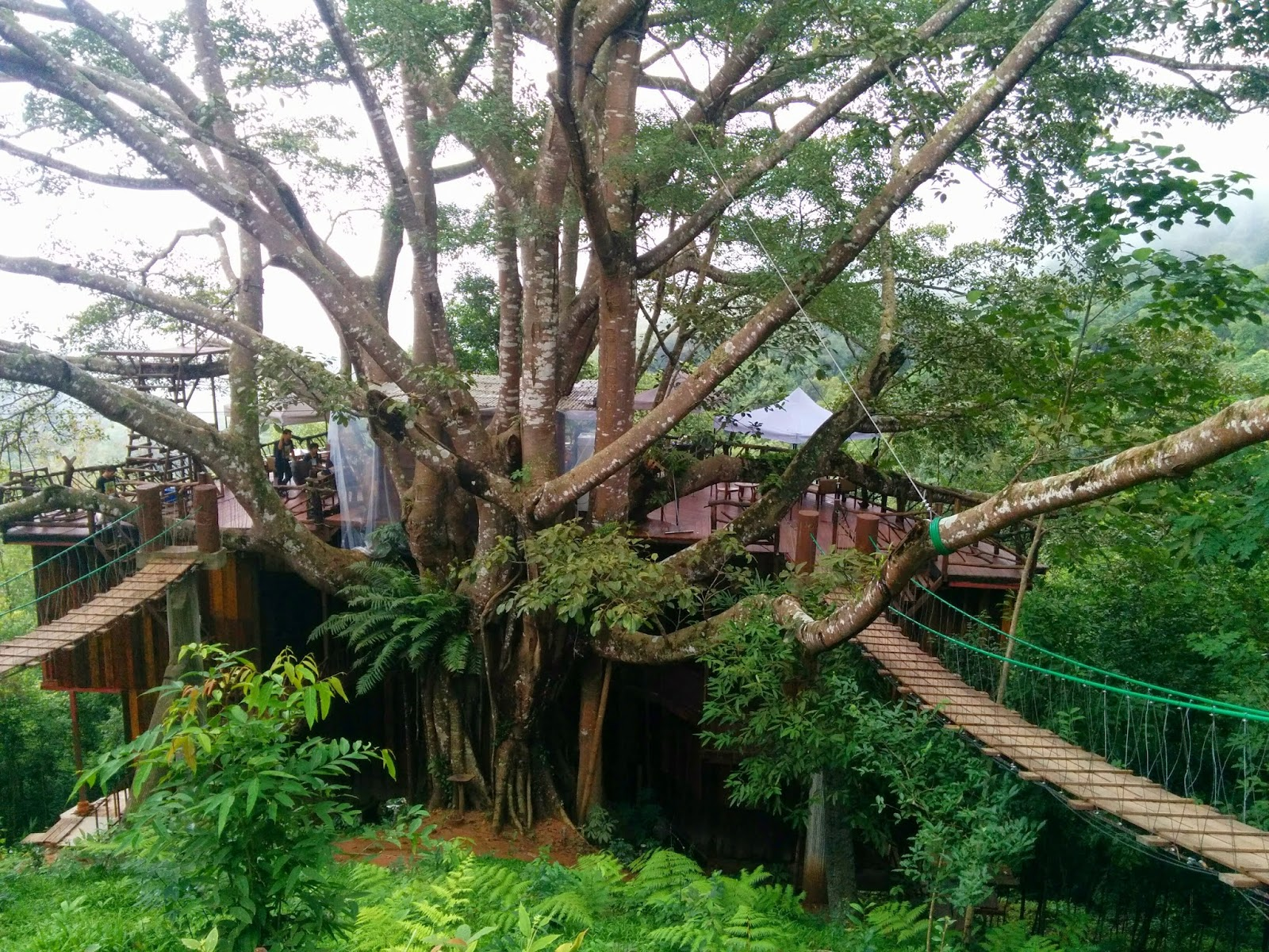Free Spirit House: This giant tree house on Vancouver Island in British  Columbia,