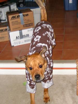 pyjama dog costume - turltesandtails.blogspot.com