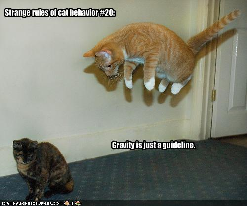 My Top Collection Funny cat pictures with captions 4