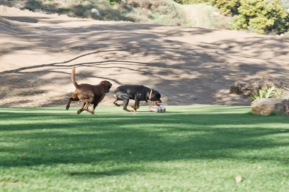 Fetch Dog Collar Post Op