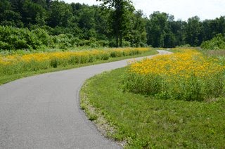 Black-Eyed Susan along the Pumpkinvine Nature Trail