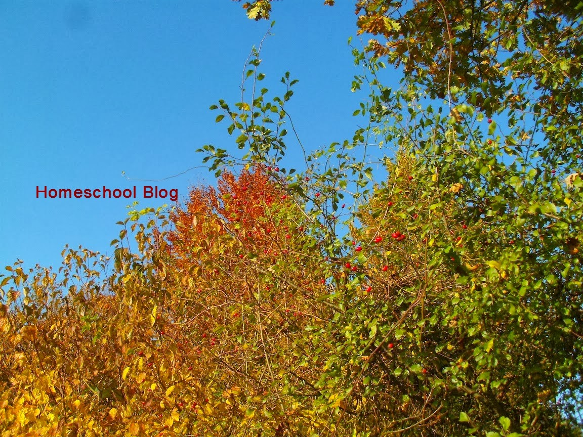 Herbst, Autumn, Homeschool Blog, Bernice und Jan Zieba