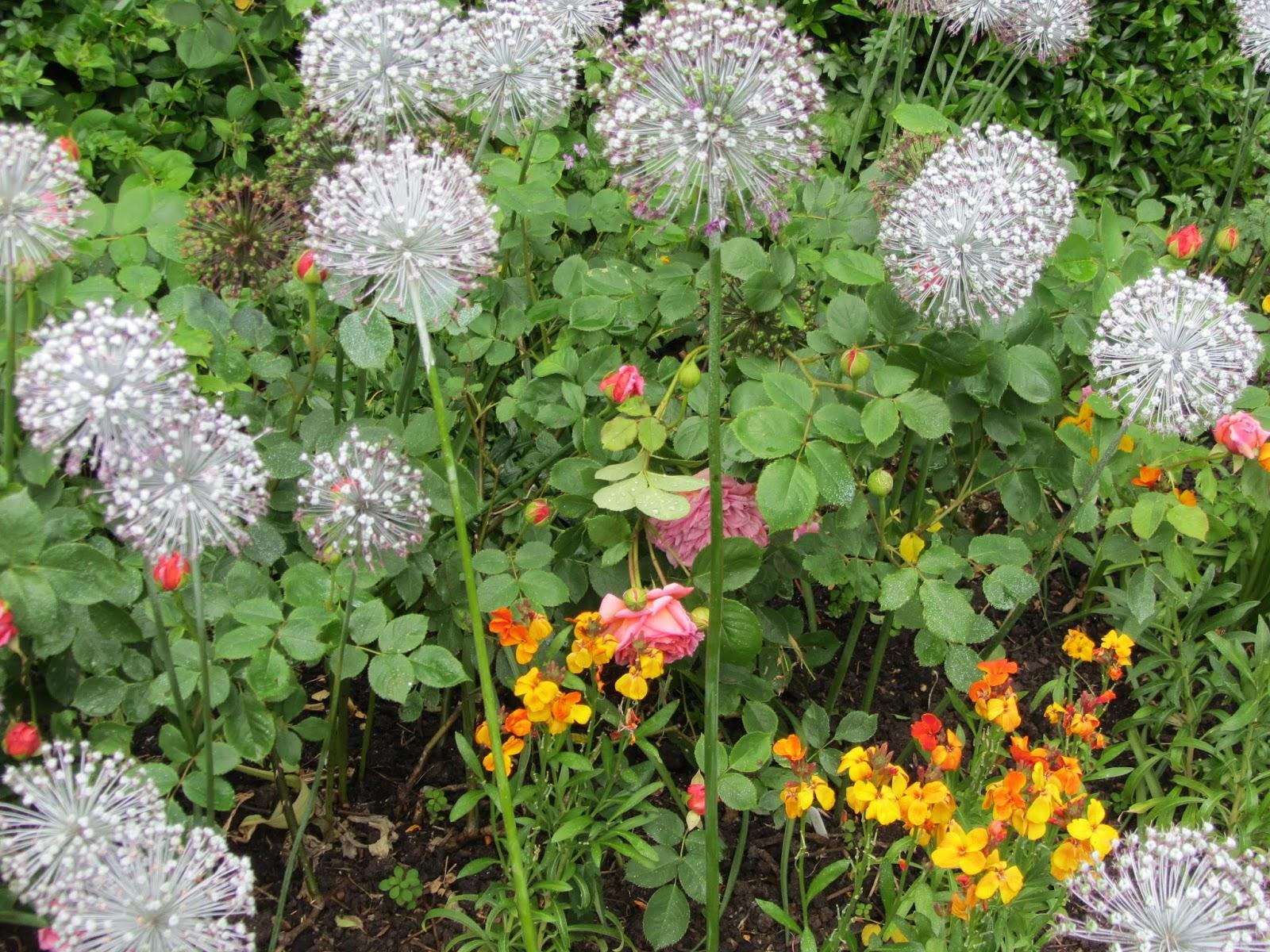 Ham photos rear garden at ormeley lodge - Garden At Ormeley Lodge