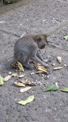 Mono en el Monkey Forest de Ubud