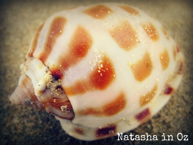 sea shell,  Beach Therapy, Natasha in Oz, Mooloolaba,