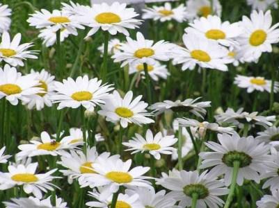 Xinh xinh móng tay hình hoa cúc - YouTube