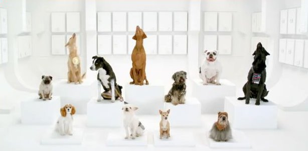 "VIDEO Animali: Un coro di cani per il ""Volkswagen Game Day"" che vi fara' divertire"