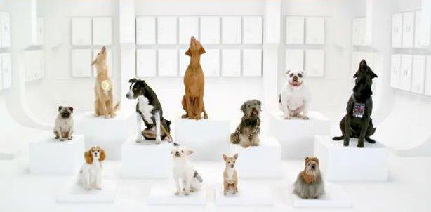 """VIDEO Animali: Un coro di cani per il """"Volkswagen Game Day"""" che vi fara' divertire"""