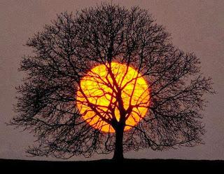 rito, que las ramas no te oculten el sol