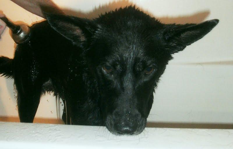 Dog Ear Smells Like Mildew