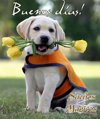 imagenes de perrito deseando buen dia