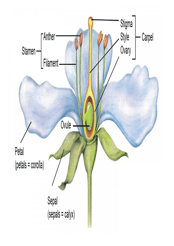 imagen de partes de la flor