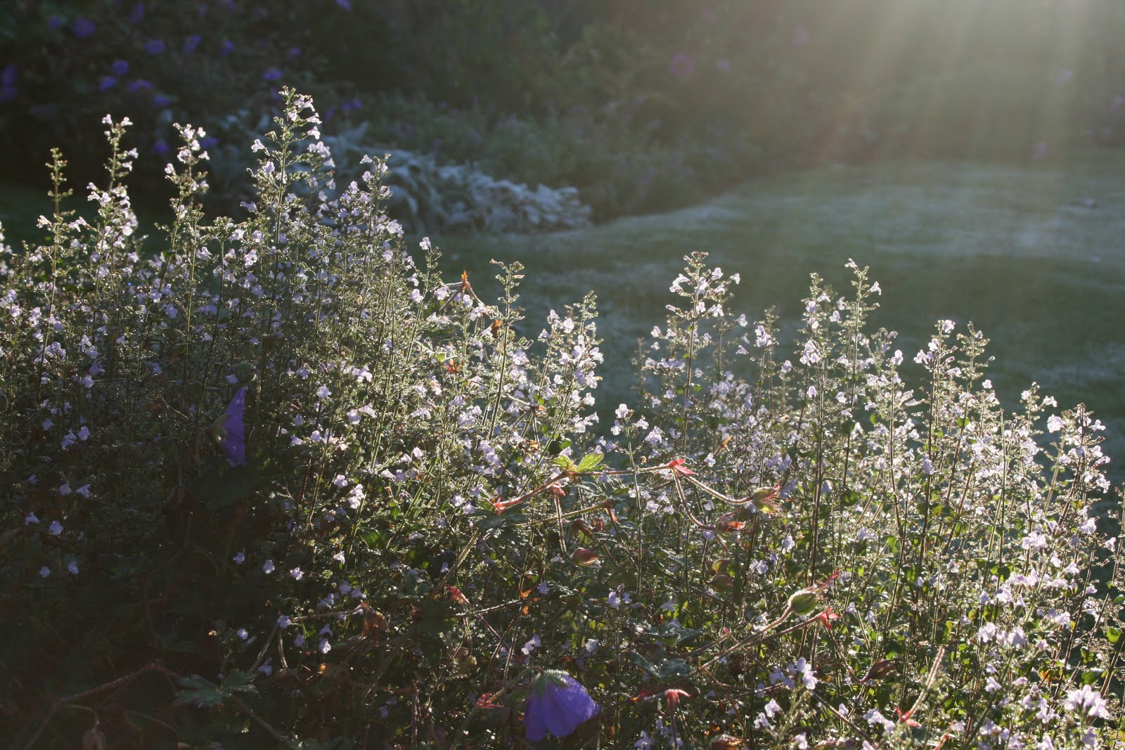 trädgårdsblogg carolin zander