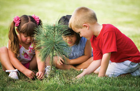 anak menanam pohon