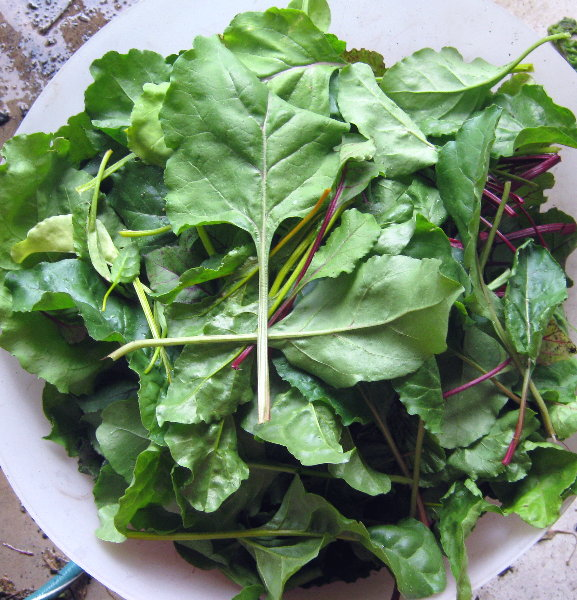 Ramblings Of A Heretic Housewife: Garden to Table: Beet greens