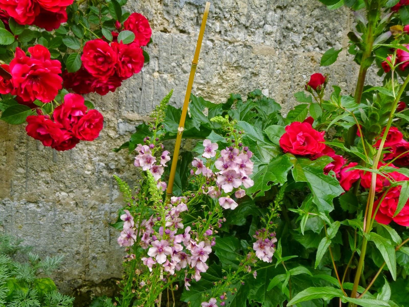 Cagouille 39 s garden le massif framboise - Deplacer un rosier ...
