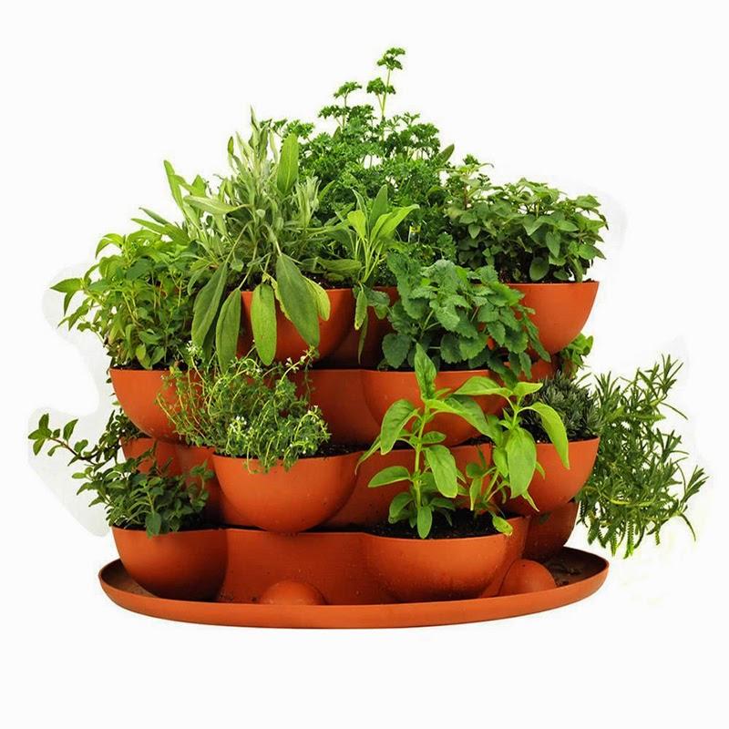 10 Ideas para Incluir Plantas sin Perder Espacio en Casa