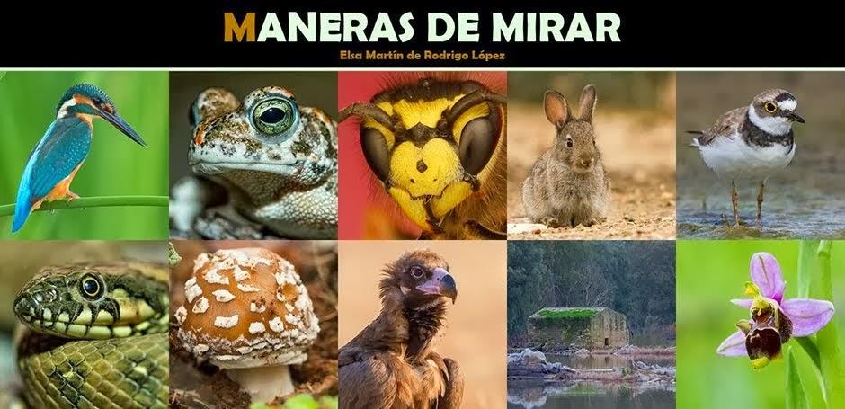 MANERAS DE MIRAR